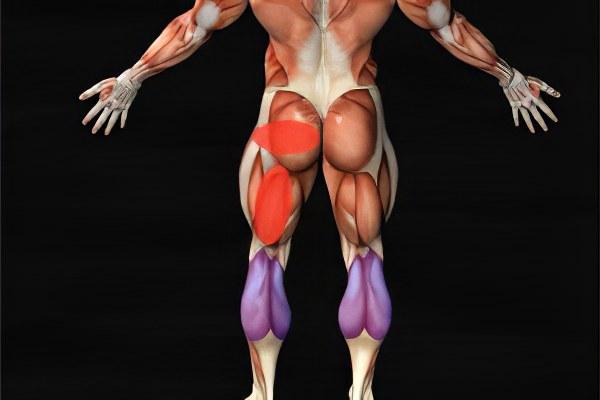 атрофии мышц бедра