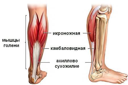 Остеома внутреннего мешочка голени около коленного сустава отек локтевого сустава после ушиба