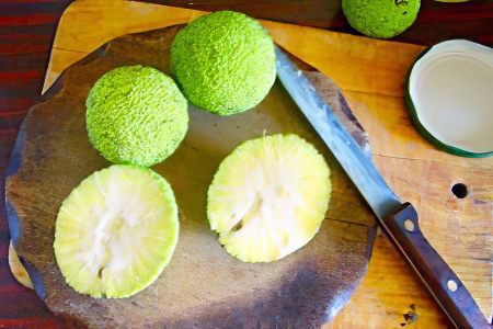 Изображение - Адамово яблоко настойка на водке для суставов kak-prinimat-adamovo-yabloko