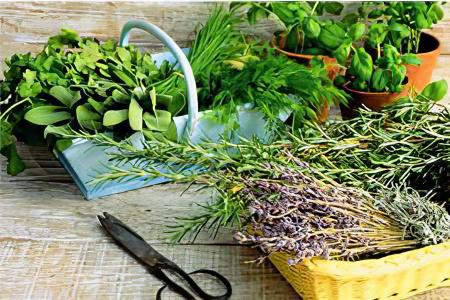 Травы при панкреатите поджелудочной железы