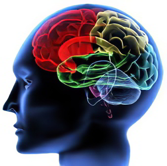Заболевания нервной системы – наследственные заболевания нервной системы