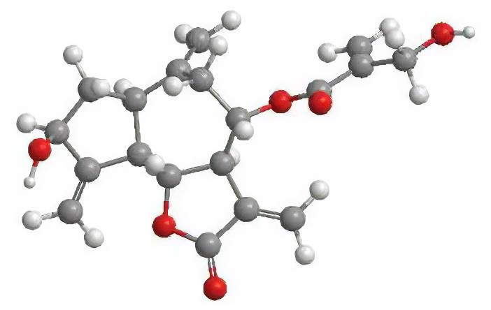 Описторхоз – острый описторхоз, симптомы и лечение