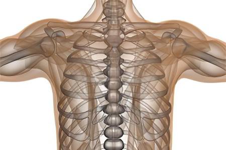 Виды перелома грудной клетки