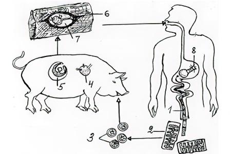 борис медведев очищаем организм от паразитов