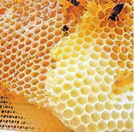 Восковые крышечки медовых сот