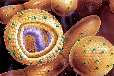Можно рожать после лечения гепатита