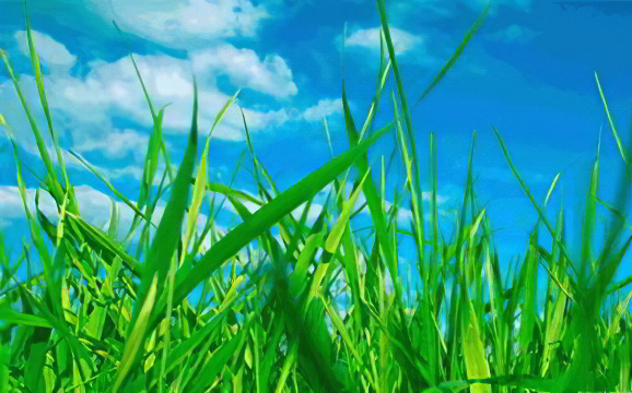 Сбор лечебных трав
