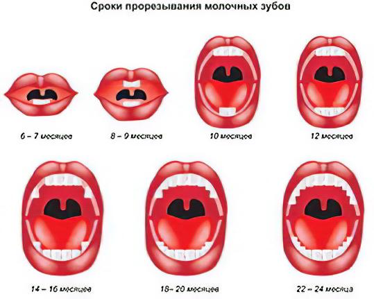 Как проявляются первые зубы