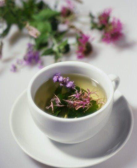 Зеленый чай при цистите
