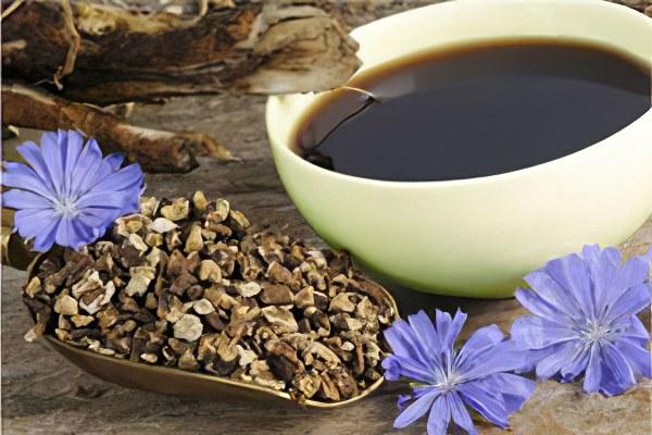 Польза и вред цикория — 10 полезных свойств напитка для здоровья организма человека