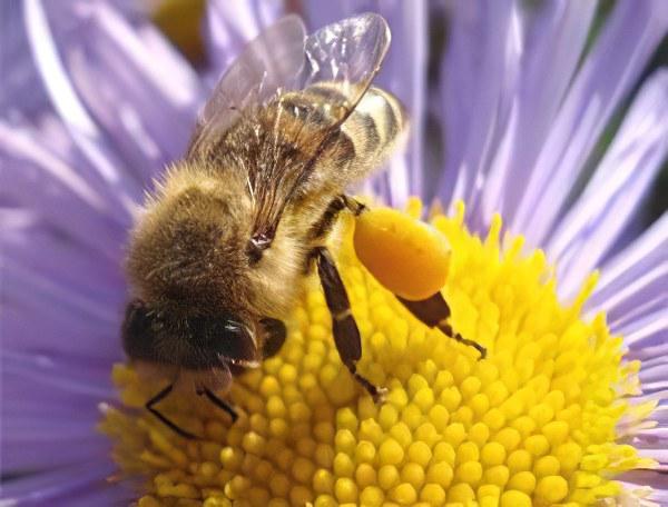 Свойства цветочной пыльцы
