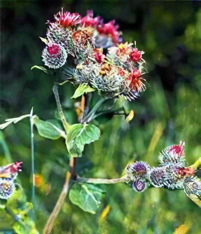 Народное травы для суставы шина для фиксации плечевого сустава