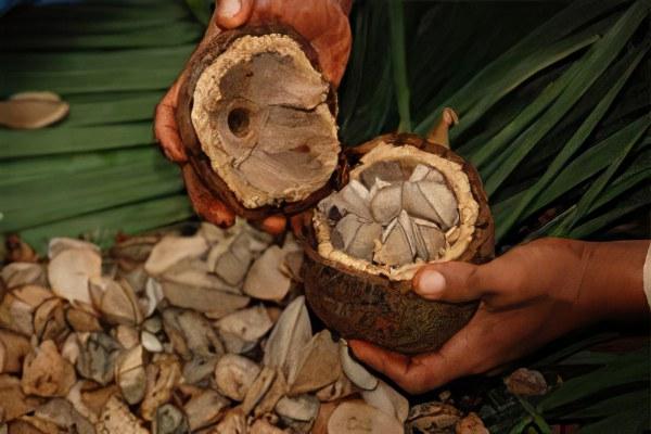 Чем полезен бразильский орех для женщин