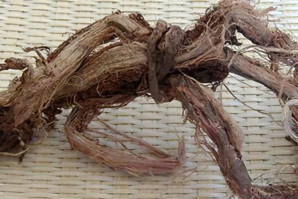 применение красного корня