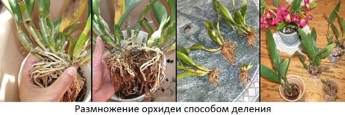 Орхидея: правильный уход в домашних условиях (как ухаживать за орхидеей)