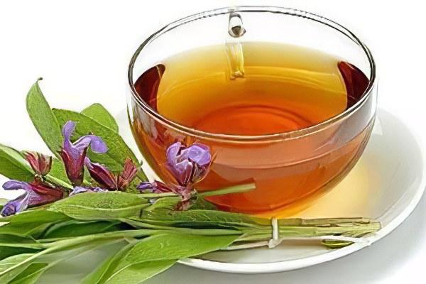 Шалфей лекарственный (трава)– полезные свойства и применение