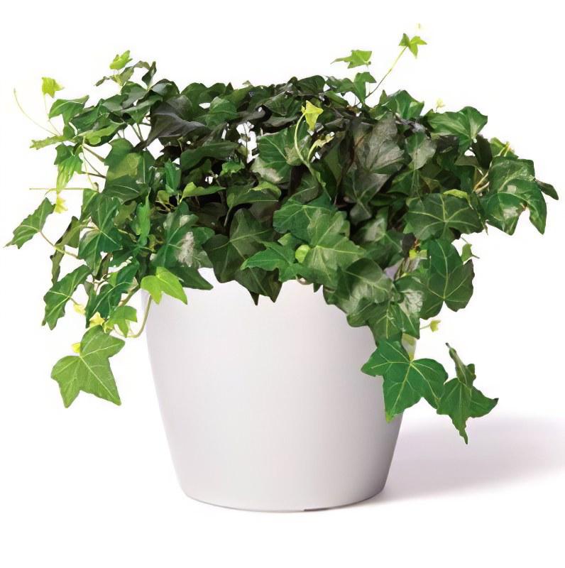 правила ухода за комнатными растениями.
