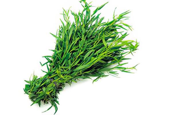 как выглядит трава тархун фото
