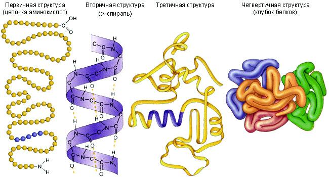 Альфа 1 глобулины повышены причины