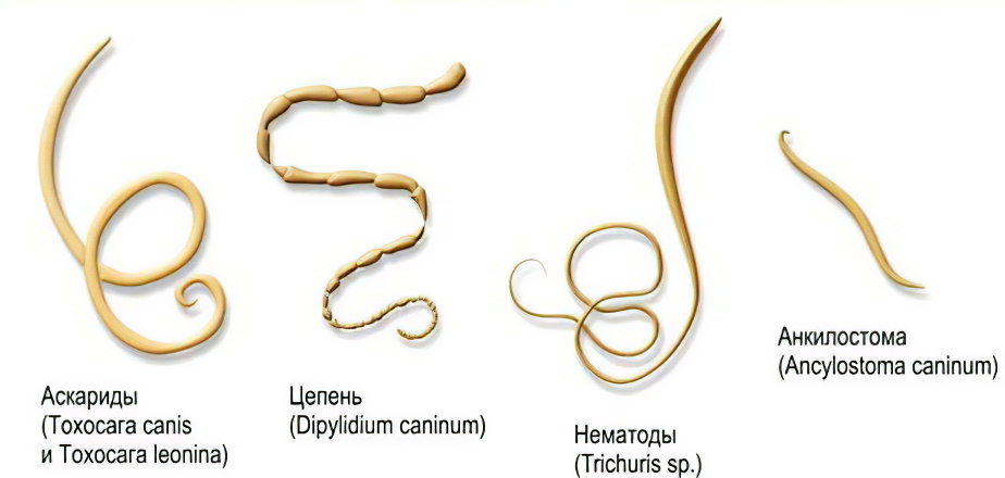 Какие бывают паразиты