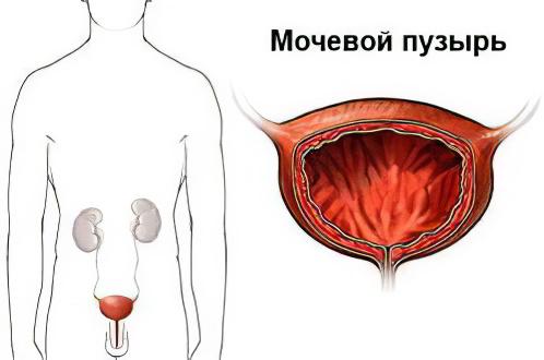 Российскаяская клиническая больница (рдкб)