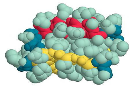 Общий белок