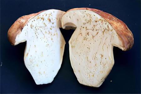 Паразиты в грибах