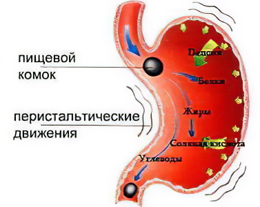 очищение желудка от паразитов
