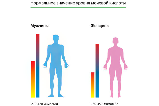 Норма мочевой кислоты